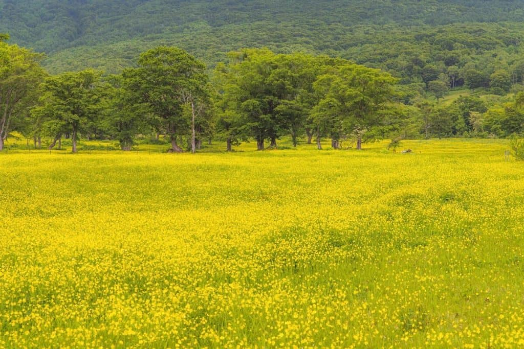 sasagamine spring fields